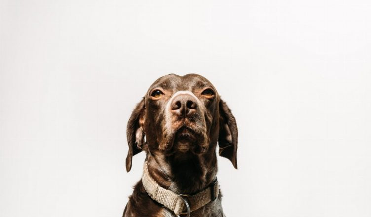 How to Choose the Best Dog Camera Ball 2020 - Post Thumbnail